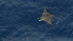 Manta Ray aerial - stock footage