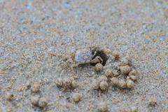 Ghost Crabs - stock photo