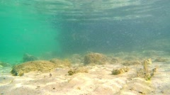 sandy seabed in Alghero - stock footage