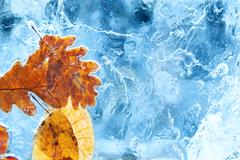Fallen autumn leaves in the blue ice - stock photo