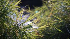 Stock Video Footage of Green grass and glittering water shallow focus shot