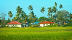 Modern Houses amongst Rice Fields and Coconut Trees Stock Footage