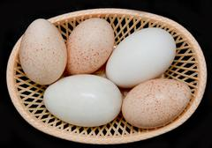 turkey and goose eggs on a black background - stock photo