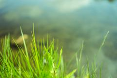Plant and blurred lake May Stock Photos