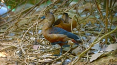 Pair of Ducks Resting under Thin Plant Cover Stock Footage