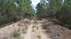 Old track between pine tree forest Stock Footage