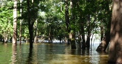 Travel in the Amazon River, Brazil, South America - stock footage