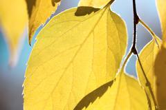 Autumn leaves against blue sky - fall season abstract background, macro shot Kuvituskuvat