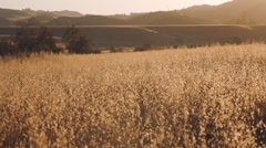 Wheat fields in mountins - stock footage