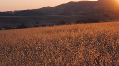 Valley at sunset - stock footage