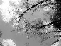 Nature in Noir Kuvituskuvat