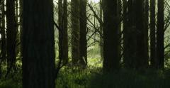 Pristine forest Stock Footage