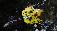 Colorful Fall Leaf in Stream1 - stock footage