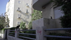 Street cats sit next to building in Tel-Aviv Stock Footage