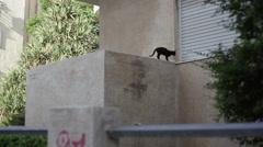 Black street cat walks across window sill Stock Footage