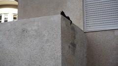 Black street cat rests on balcony Stock Footage