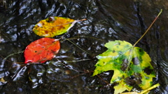 Colorful Fall Leafs in Stream3 Stock Footage