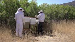 Beehive rural farm two beekeepers check honey 4K - stock footage