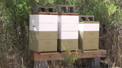Beehives near trees rural farm property making honey 4K Stock Footage