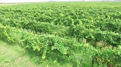 View of the vineyards fields in Montenegro Stock Footage