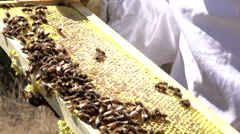 Beekeeper holding honey comb with bees working 4K Stock Footage