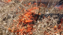 Forest fire: dry grass burning to ashes - stock footage