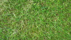 Green grass background 4K - stock footage
