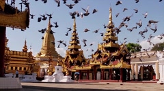 Flying pigeons over the pagodas. Stock Footage