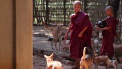 Dog shelter in Burma with Buddhist monks - stock footage