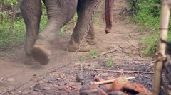 Stock Video Footage of Legs of huge elephant chained in captivity