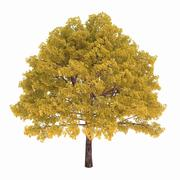 Deciduous tree with yellow leaves isolated on white background - stock illustration