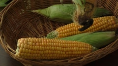 Low yield corn crop due to drought Stock Footage