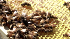 Honey bees on comb swarm 4K Stock Footage