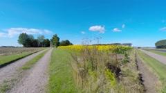 Walking along a sunflower field on a summerday Stock Footage