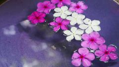 Video pink flowers floating in bowl of water from top view. Spa decoration Stock Footage