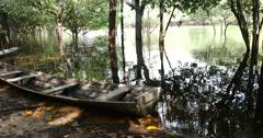 Exploring the wetlands in Amazon, Brazil Stock Footage