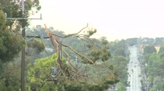 Storm Damage Tree on High Voltage Power Line - stock footage