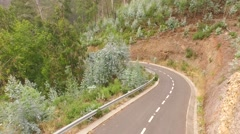 Aerial of a road with euclypturs trees Stock Footage