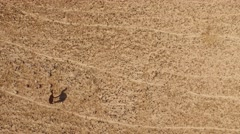 Flying View of Camels in NEGEV, ISRAEL in 4K - stock footage