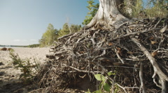 Pattern of intertwined tree roots Stock Footage