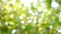 De focused of Natural green leaf blurred background Stock Footage