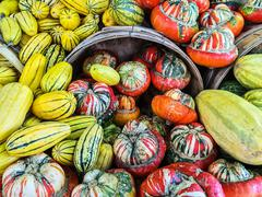 Delicata and Turban squashes at the market - stock photo