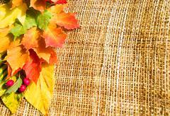 Border of autumn leaves Stock Photos