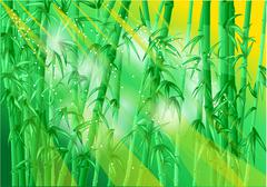 bamboo forest - stock illustration