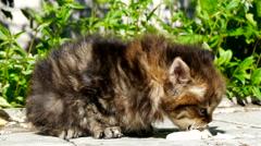 Kitten eating sour cream Stock Footage