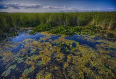 Wetland - Point Pelee conservation area - stock photo