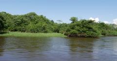 Wetland in Amazon, Brazil Stock Footage
