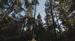 Camera looks at the sky through the pine branches Stock Footage
