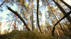 Slider moving forward. Dolly move along a green forest - stock footage