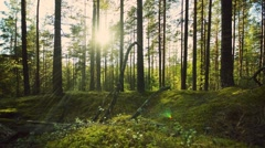 Right to left slider dolly move along a green forest floor - stock footage